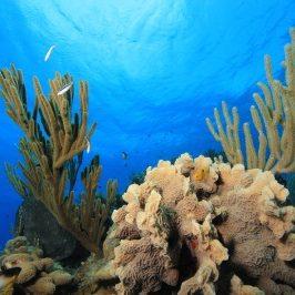 古巴水下图片