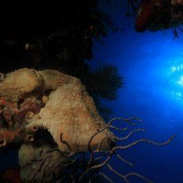 水下的图片在古巴