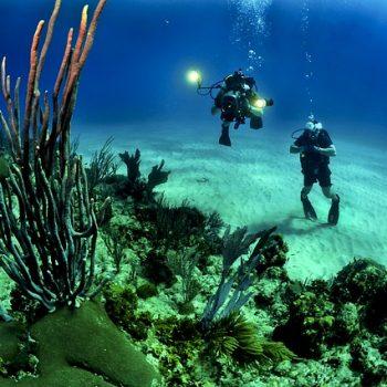 coral-reef-miami-350x350.jpg