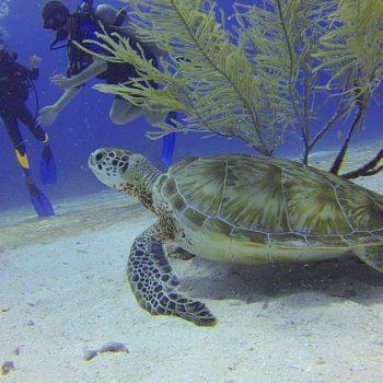 sea-turtle-350x350.jpg