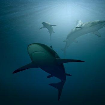 shark-cay-west-350x350.jpg