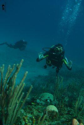 Mergulho em Havana